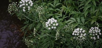 10 Самых ядовитых растений на планете