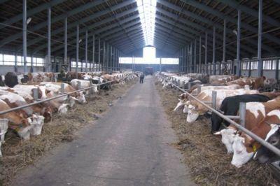 Аграрии нидерландов поделятся опытом для развития казахстанского агробизнеса