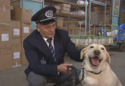 Акмолинские кинологи раскрыли секреты воспитания собак