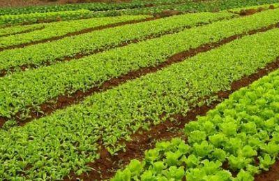 Центр устойчивого земледелия открылся в казахстане