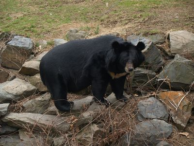 Человек произошел от медведя