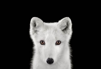 Фотограф брэд уилсон портреты животных