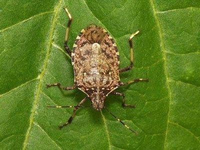 Химия и жизнь насекомых