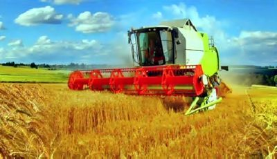 Из-за погоды в ско ухудшилось качество зерна