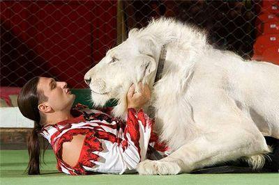 Эдгард запашный: мы можем поцеловать в нос тигра или гепарда, а зеленые нет