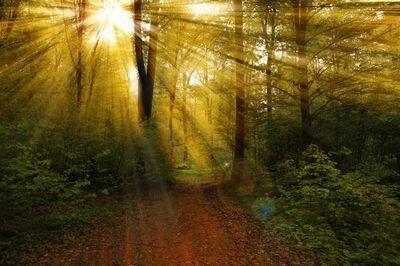 Как передать красоту лесных пейзажей в фотографии