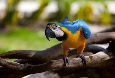 Как появились птицы