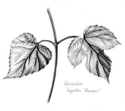 Как рисовать листья