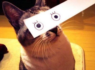 Котомонтаж или коты-аниме по-японски