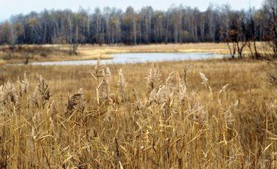Кремлевский проект: гектар земли для каждого россиянина - «экономика»