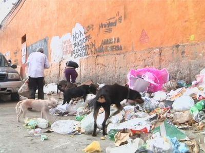 Кризис в венесуэле: людям нечем кормить своих домашних питомцев