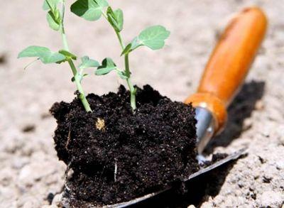 Органическое земледелие - залог богатого урожая