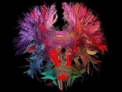 Открытия нейробиологии в 2014 году