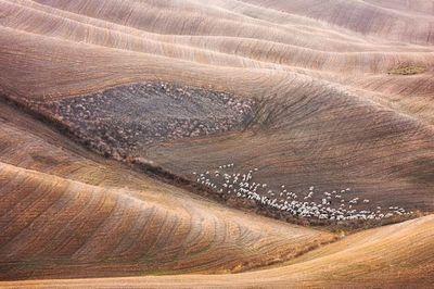 Овечьи стада в тоскане, фотограф мартин собас