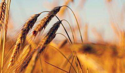 Павлодарские фермеры берут заботу о родном селе в свои руки