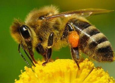 После вымирания пчёл опылять цветы придётся роботам?