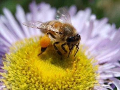 Прививки для пчел