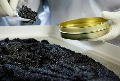 Производство черной икры планируют наладить в мангистауской области