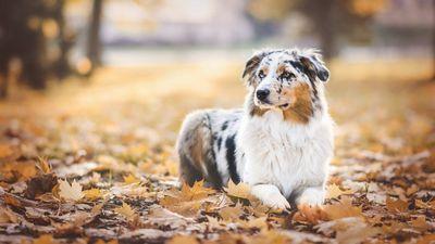Самые красивые породы собак (22 фото)
