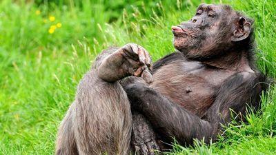 Самые смешные обезьяны (18 фото)