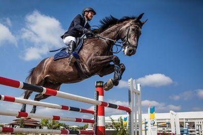 Спортивные занятия с лошадью