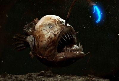 Топ биолюминесцентных организмов