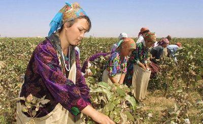 Узбекистан: учителей ферганы выгоняют на хлопковые поля - «экономика»