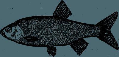 Уженье рыб не терпит суеты