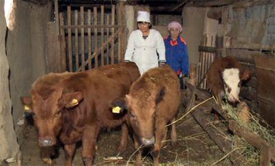 В атырауской области начинаются выплаты компенсаций за павший скот