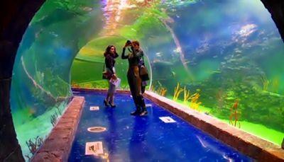 В россии открылся новый гигантский океанариум