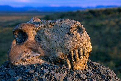 Великого вымирания не было?