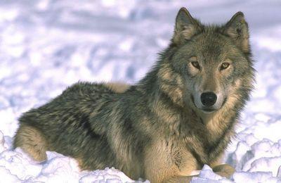 «Волк с уолл-стрит» книга джордан белфорт
