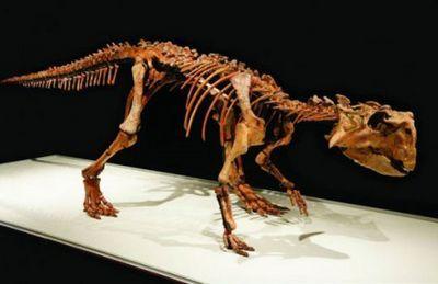 Все, что вы хотели знать про сибирского динозавра