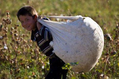 Вузбекистане запретили принудительный идетский труд при сборе хлопка - «экономика»