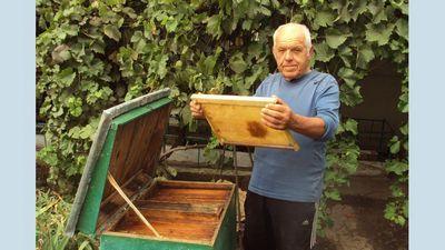 Выручают пчелы и профессия