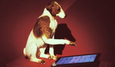 Животные выбирают ipad