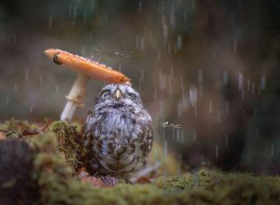 Знаменитая сова полди. фотограф таня брандт